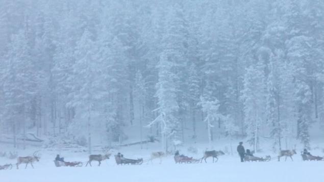 Aarne Aatsinki leads a group of reindeer sleighs through the snow.