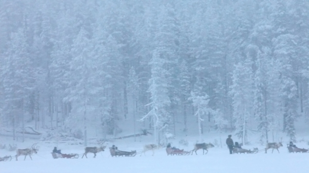 Aarne Aatsinki leads a group of reindeer sleighs through the snow.